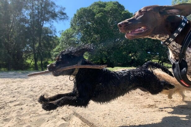 Dog Walking in Sydney