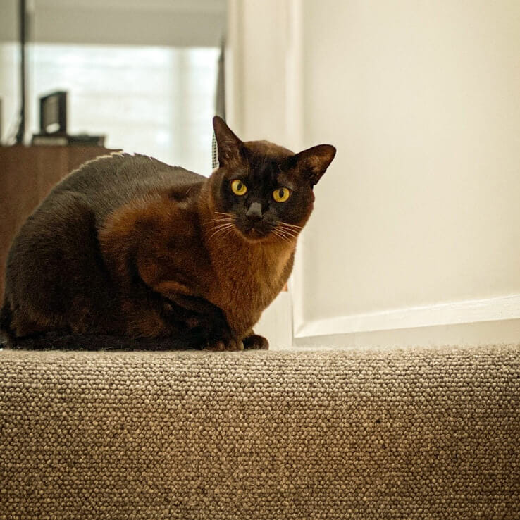 In-Home Pet Visits in Sydney