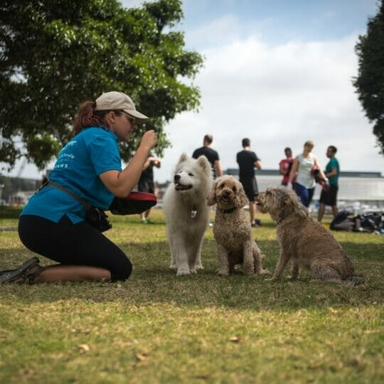 Private Dog Obedience in Sydney