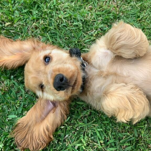 Need Help With A Puppy?
